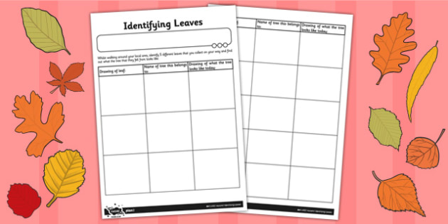 Identifying Leaves Worksheet - identifying, leaves, worksheet