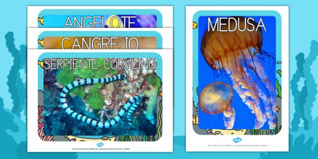 Bajo el mar Fotos de exposición