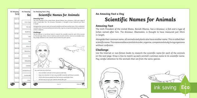 Scientific Names for Animals Activity Sheet - Amazing Fact Of The Day, activity sheets, powerpoint, starter, morning activity, December, scientifi