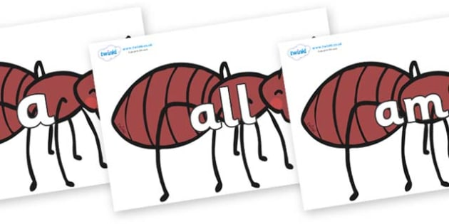 Foundation Stage 2 Keywords on Ants - FS2, CLL, keywords, Communication language and literacy,  Display, Key words, high frequency words, foundation stage literacy, DfES Letters and Sounds, Letters and Sounds, spelling