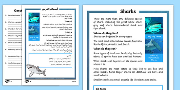 Sharks Differentiated Reading Comprehension Activity Arabic Translation - arabic, Sharks, sea creatures, KS1 reading, non-fiction, information, comprehension, questions, fact file
