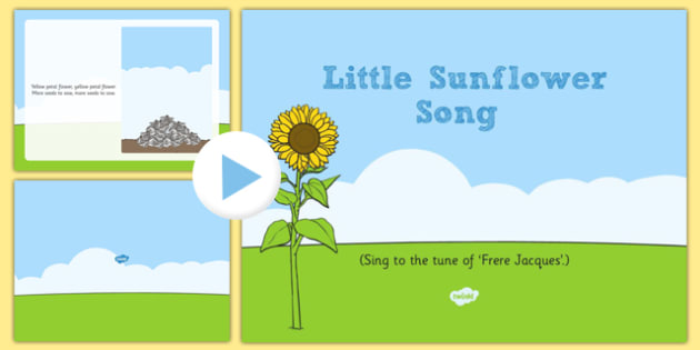 Little Sunflower Song PowerPoint