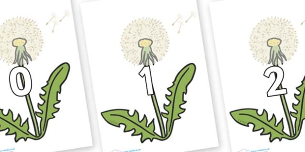 Numbers 0-100 on Dandelion Seeds - 0-100, foundation stage numeracy, Number recognition, Number flashcards, counting, number frieze, Display numbers, number posters