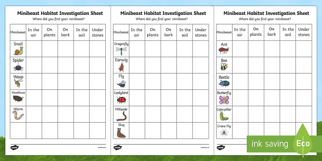 Minibeast Habitat Investigation Worksheet - minibeast investigation, naming minibeasts, describing minibeasts, Minibeasts, Topic, Foundation stage, knowledge and understanding of the world, investigation, living things, snail, bee, ladybird, butterfl