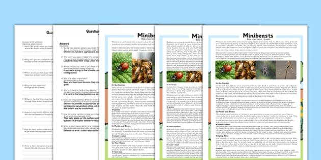 Minibeasts Differentiated Reading Comprehension Activity Polish Translation - polish, minibeasts, differentiated, reading comprehension, activity