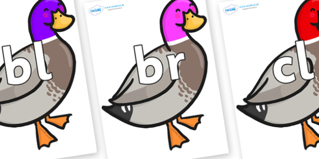 Initial Letter Blends on Duck - Initial Letters, initial letter, letter blend, letter blends, consonant, consonants, digraph, trigraph, literacy, alphabet, letters, foundation stage literacy