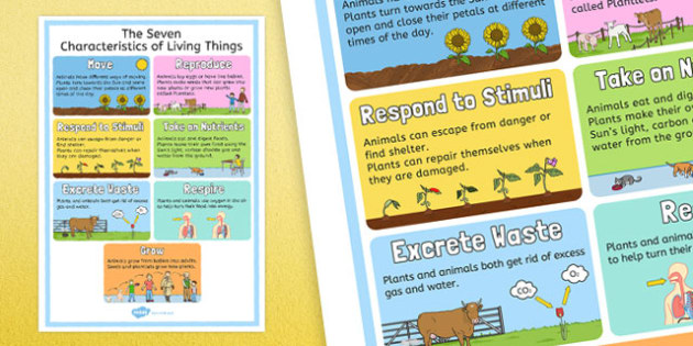 Characteristics of Living Things Display Poster - australia, Science, Year 3, Living, Non-Living, Characteristics, Poster, Australian Curriculum