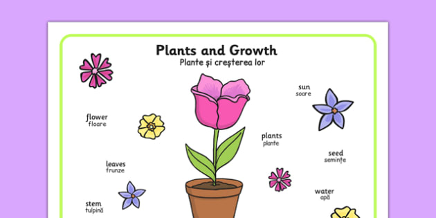 Plant Growth Word Mat Romanian Translation - romanian, Plant, Growth, Word Mat, Topic, Foundation stage, knowledge and understanding of the world, investigation, living things