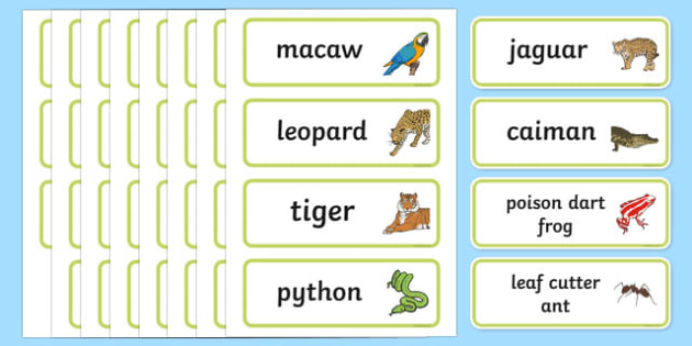 Rainforest Explorer Role Play Word Cards - rainforest, explorer, role play, word cards, cards, flashcards, binoculars, camera, snake, forest, ecosystem, rain, humid, parrot, monkey, gorilla