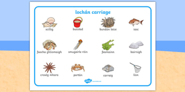 lochán carriage Seaside Rock Pool Word Mat Gaeilge - irish, gaeilge, seaside, beach, seaside word mat, rockpool word mat, rock pool word mat, seaside key words, seaside words, beach words