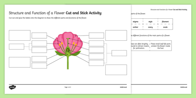 Structure and Function of a Flower Cut and Stick Activity Sheet, worksheet, plenary activity
