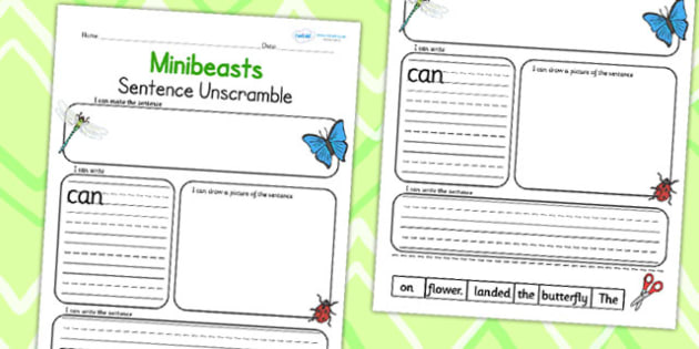 Minibeast Sentence Unscramble - minibeasts, word game, literacy
