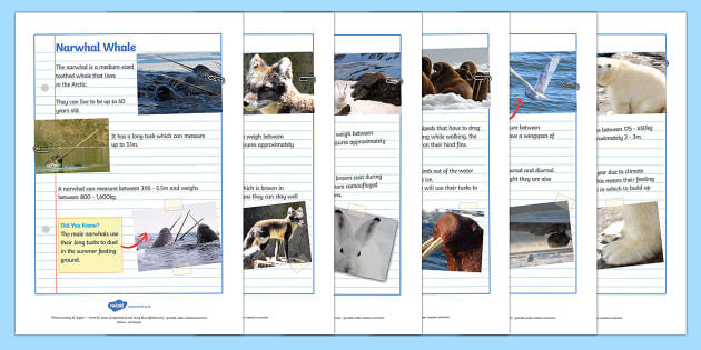 Polar Animals Factfile Sheets - factfile, facts, facts about, polar animals, animals, polar, arctic animals, antarctic animals, facts about animals, habitats, fact sheets, factfile sheets, information