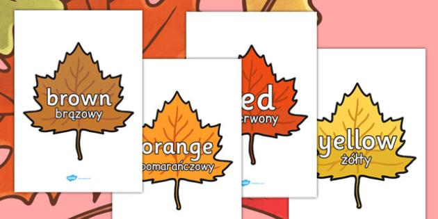Colour Words on Autumn Leaves Polish Translation - polish, autumn