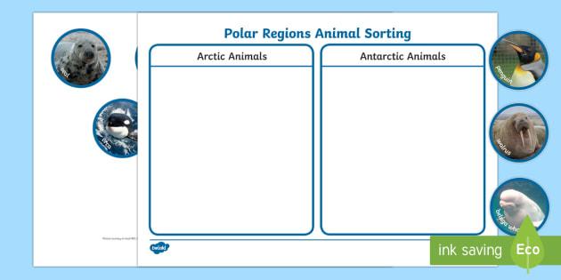 Polar Regions Animal Sorting Activity - The Arctic, Polar Regions, north pole, south pole, explorers, orca, whale, penguin, polar bear, anta