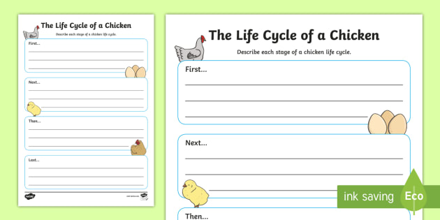 The Life Cycle of a Chicken Writing Frame - writing, frame, cycle