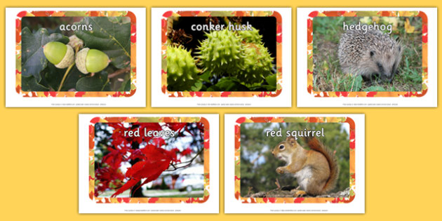 Autumn Display Photos - Display Posters, Autumn, seasons,  A4, display, autumn pictures, autumn display, leaves, acorn, conker, atumn