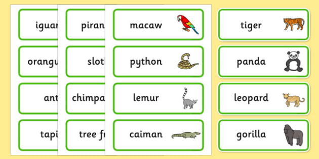 Jungle & Rainforest Word Cards - Word cards, Word Card, flashcard, flashcards, vines, A4, display, snake, forest, ecosystem, rain, humid, parrot, monkey, gorilla