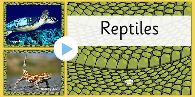 Australian Reptiles PowerPoint - australia, reptiles, powerpoint, animals