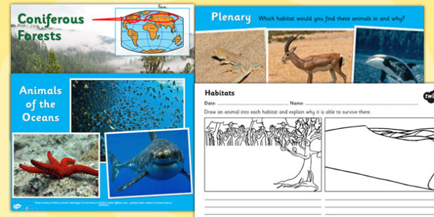 Living Things and their Habitats Lesson Teaching Pack