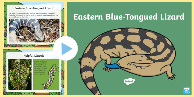 The Eastern Blue-tongued Lizard PowerPoint - Australian Animals, reptiles, activity sheets, research,  reading, writing, birds, fish, mammals, Au
