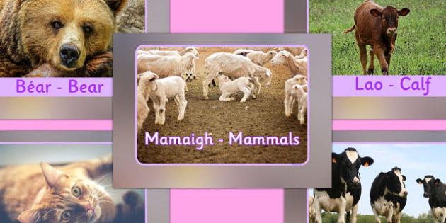 Mammals Display Photos Gaeilge Translation - roi, irish, gaeilge, vocabulary, display photos, mammals