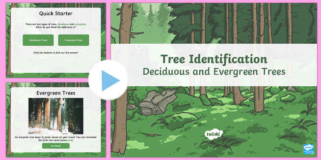 Deciduous and Evergreen Trees Task Setter PowerPoint - australia,