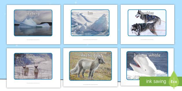 Polar Regions Display Photos - Polar Regions Display Photos, Polar Regions, polar region, region, polar, display, poster, photos, image, ice, North Pole, South Pole, Arctic, Antarctic, polar bear, penguin, glacier, iceberg, seal, husky, northern ligh
