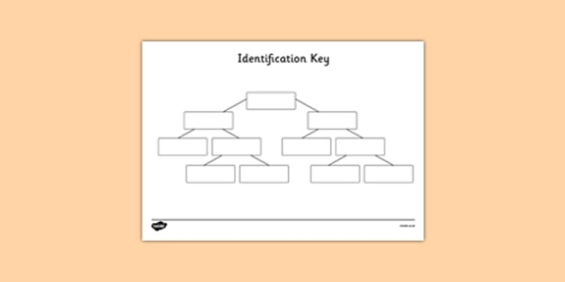 Yes, No Identification Key Template - yes no identification key, yes no identification template, graphic organiser