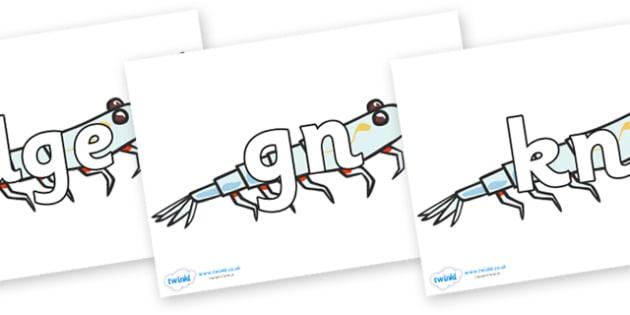 Silent Letters on Plankton - Silent Letters, silent letter, letter blend, consonant, consonants, digraph, trigraph, A-Z letters, literacy, alphabet, letters, alternative sounds