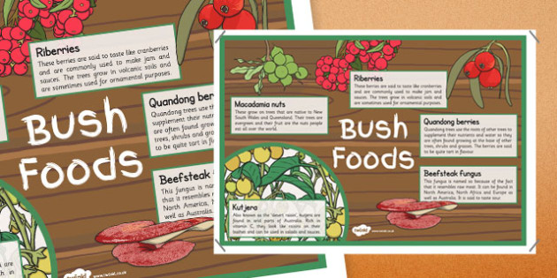 Bush Foods Information Display Poster - australia, bush food, information, display poster, display, poster, bush, food