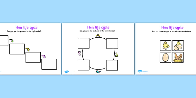 Hen Life Cycle Worksheets - Hen, egg, chick, hatch, Life cycle
