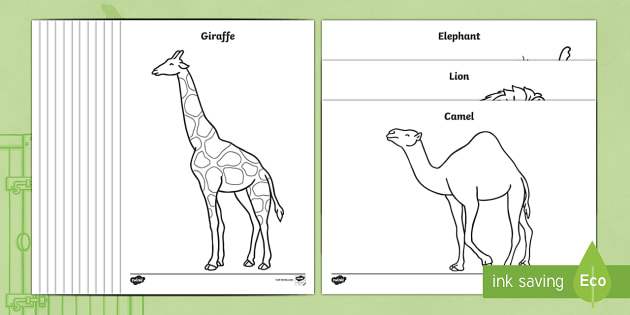 Colouring Sheets to Support Teaching on Dear Zoo - Dear Zoo, Rod Campbell story, zoo, zoo animals, adjectives, descriptive words, lion, monkey, puppy, giraffe, story book, story book resources, story sequencing, story resources, zoo, animals, Colouri