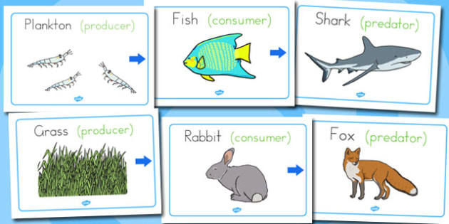 Food Chain Display Posters - australia, food chain, display, posters