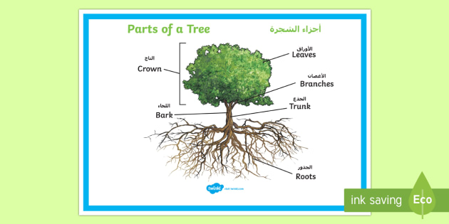 Parts of a Tree Poster Arabic/English - Parts of a Tree Poster - plants, flowers, stem, leaf, roots, leaf, poster, display poter, display, p
