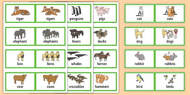 48 Regular Plural Cards - SLI, grammar, EAL, language disorder, Language delay