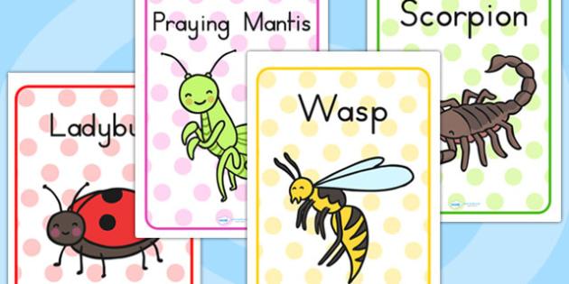 Minibeasts Cute Display Posters - minibeasts display, poster