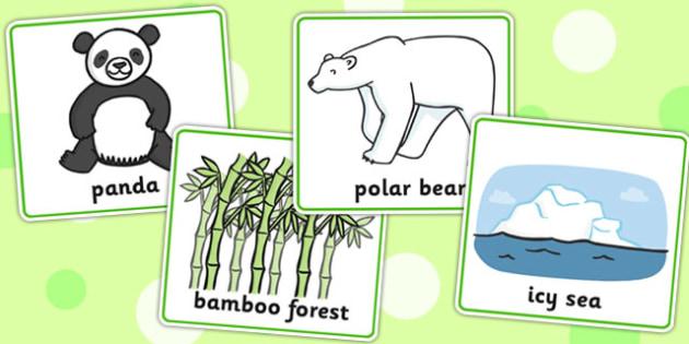 Matching Cards Bears and Habitats - matching, bears, habitats