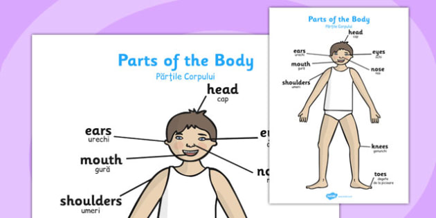 Parts of the Body A4 Head and Shoulders Romanian Translation - romanian