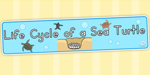 Sea Turtle Life Cycle Display Banner - life cycles, display