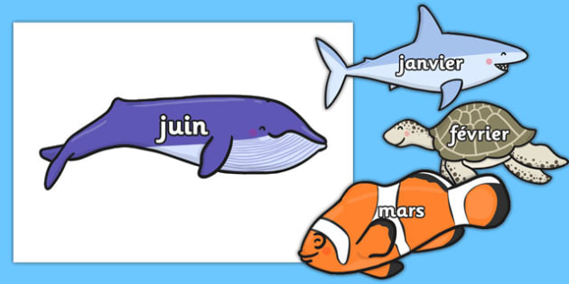 Months of the Year on Sea Creatures French - french, months, year, sea creatures, sea, creatures