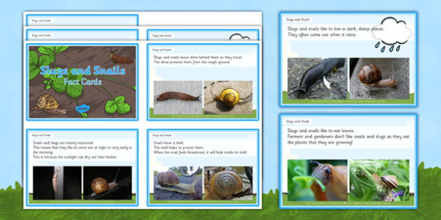 Slugs and Snails EYFS Fact Cards - EYFS, Understanding the world, minibeasts