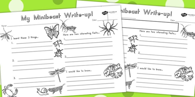 Minibeasts Write Up Worksheet - writing aid, writing template