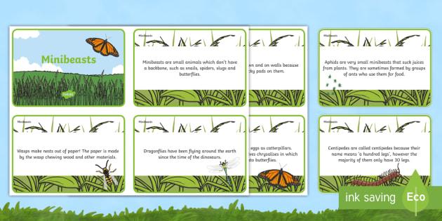 Amazing Minibeast Display Fact Cards - minibeast, fact, cards