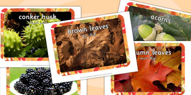 Autumn Display Photos Arabic Translation - arabic, autumn, display