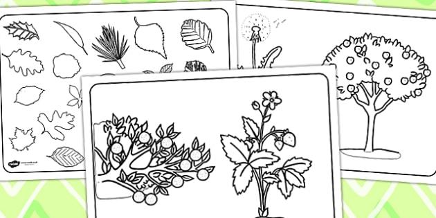 Plant Colouring Sheets - plants, plant sheets, colouring sheets, colouring worksheets, colour and write, colour in sheets, themed colouring sheets