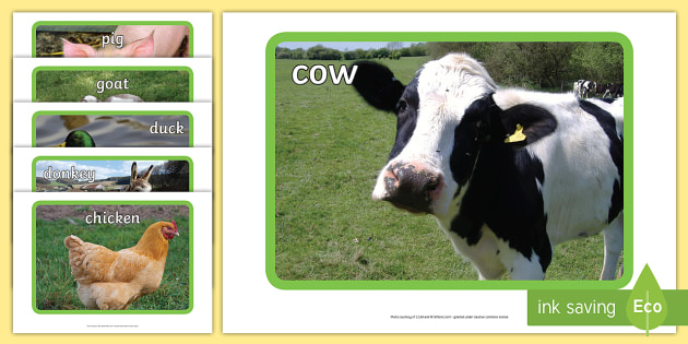Farm Display Photos - Display Posters, Farm,  A4, display, posters, pig, cow, chicken, goat, tractor