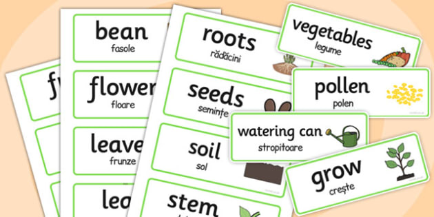 Growth Topic Word Cards Romanian Translation - romanian, growth, word cards