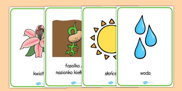 Plakaty ze słownictwem Rośliny i wzrost po polsku - przyroda