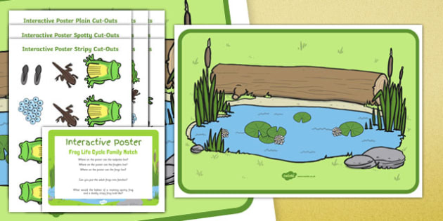 Frog Life Cycle Family Match Interactive Poster and Resource Pack